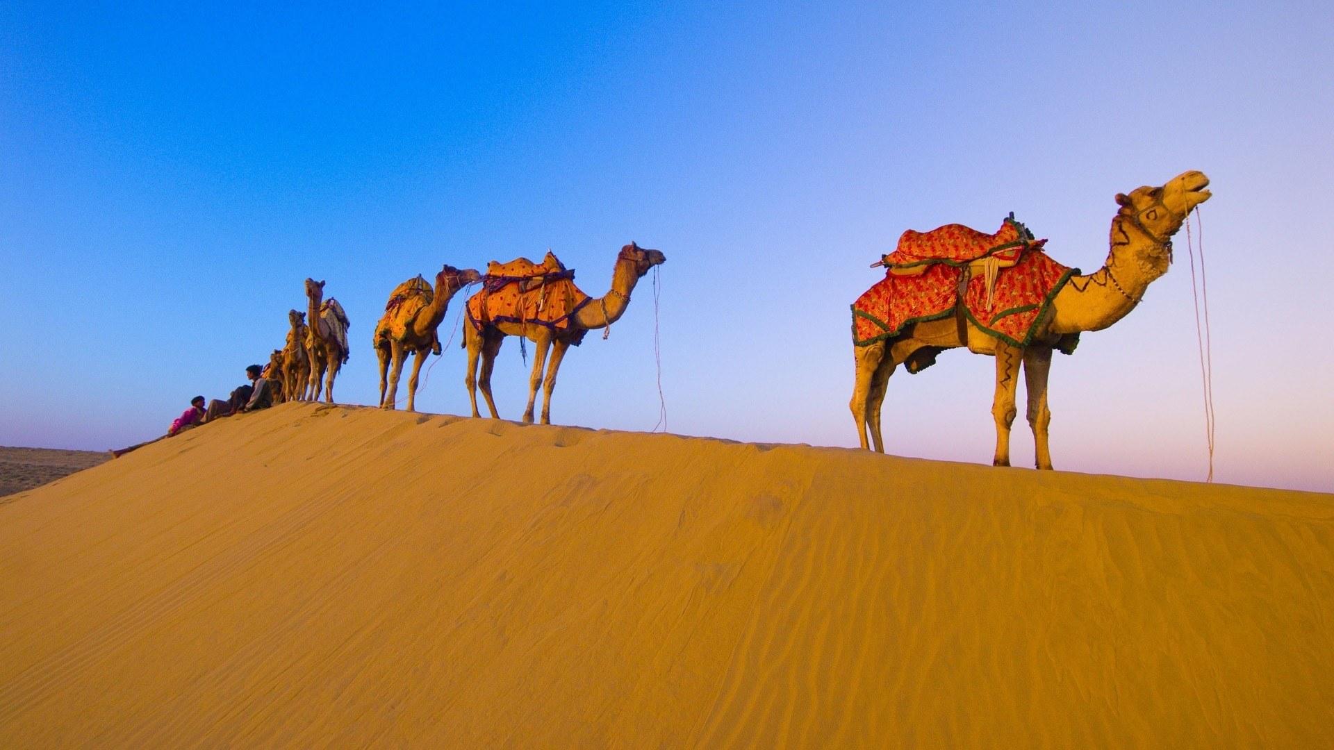 корабли пустыни