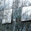 Птицы видят в стекле свое отражение