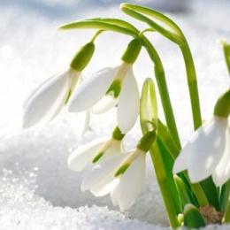 Новые авторские загадки про Весну