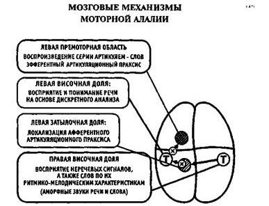 Механизмы моторной алалии