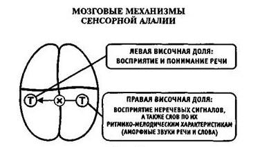 Механизмы сенсорной алалии